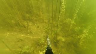 Подводная охота. Промахи новичка