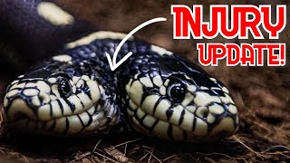 TWO HEAD SNAKE INJURY UPDATE!! GREEN ANACONDA AND BABY ALBINO CARPET PYTHONS!! | BRIAN BARCZYK