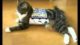 YouTube          самые смешные видео про животных, со всего рунета! 2