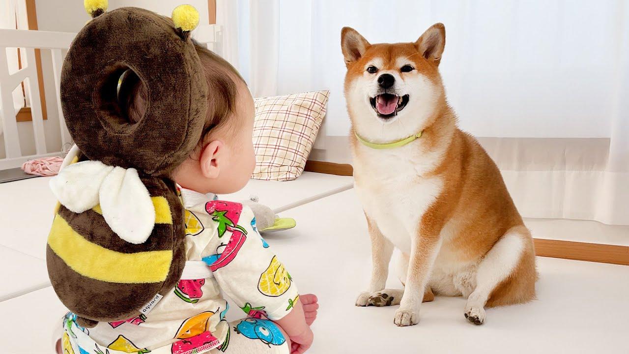 강아지 집사가 되고 싶은 아기 ㅋㅋ