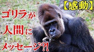 【感動】手話のできる奇跡のゴリラ『ココ』が、人間に対し自然界からの...