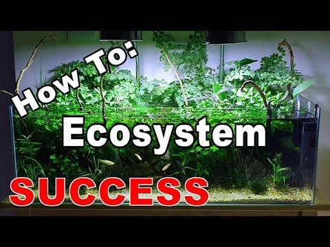 Ecosystem Fish Tank - SUCCESS!!    How To: No Filter Fish Tank, No Heater, No Ferts, No co2