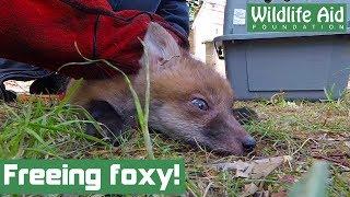 Football net fox cub hides behind a fridge