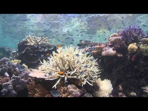 DEAD? DYING? or DISTORTED TRUTH?  THE GREAT BARRIER REEF