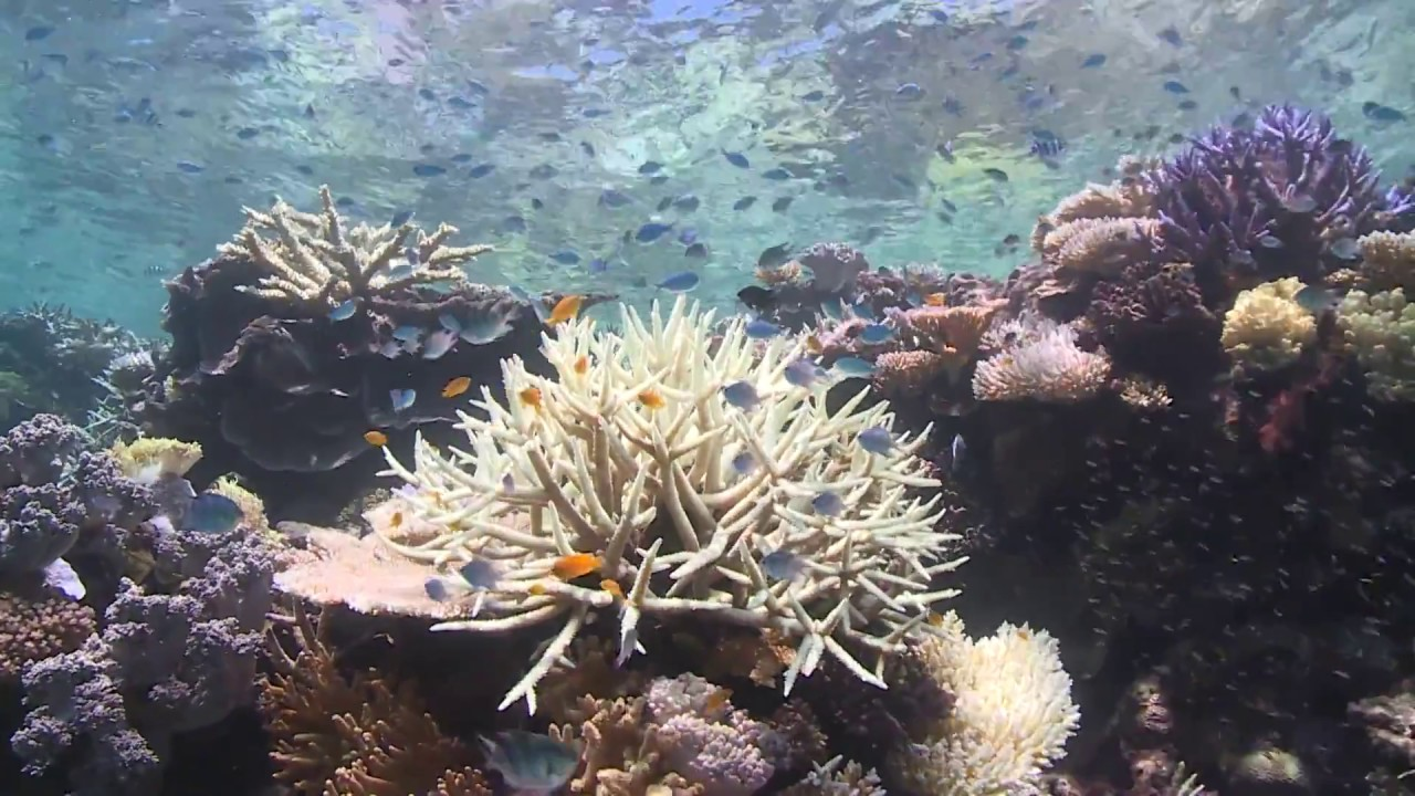 Dead Dying Or Distorted Truth The Great Barrier Reef