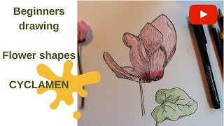Drawing a Cyclamen - Beginners Flower Drawing