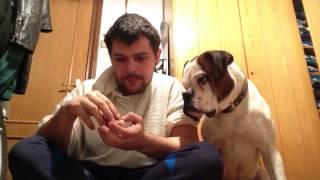 Собака очень умная и слушает хозяина
