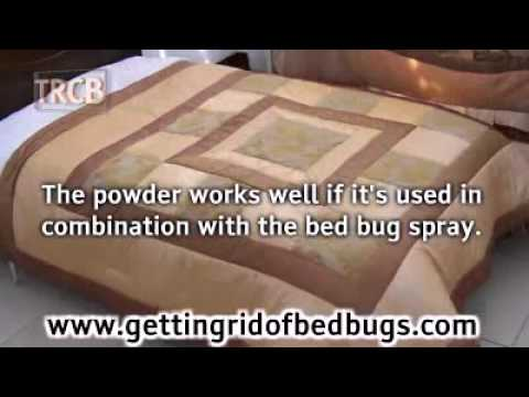 How To Use Bed Bug Powder