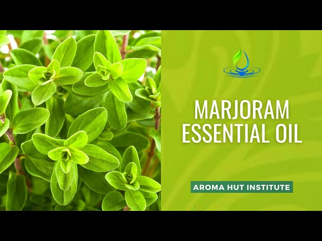 Marjoram Essential Oil Uses and Benefits