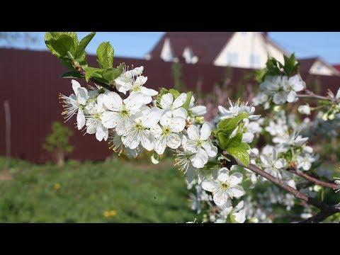 Чем опрыскивать сад, если он уже цветет? Неужели уже опоздали?