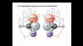aminoacidos y enlace peptidico