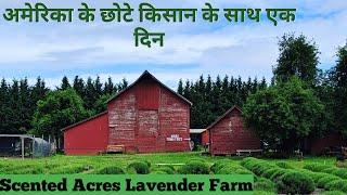अमेरिका के किसान/Small Farmers In America/Lavender Farm