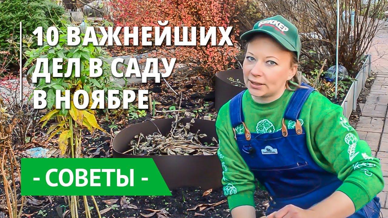 Основные работы в саду и огороде в ноябре. Готовим сад, дачу к зиме!