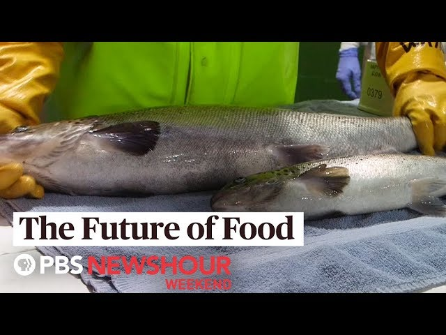 Future Of Food This Genetically Engineered Salmon May Hit U S Markets As Early As 2020 Pbs Newshour Weekend