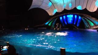 The Dolphin Show - Georgia Aquarium