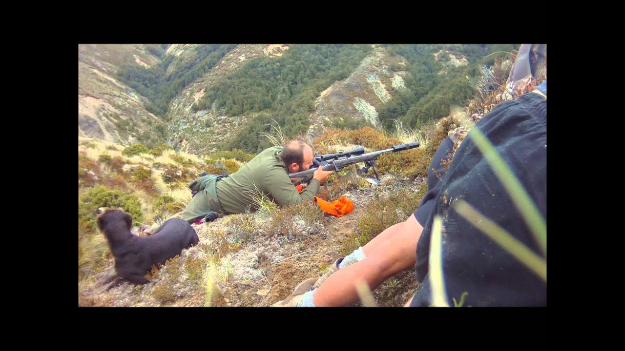 New Zealand Shooting Video YouTube Update: LONG RANGE SIKA SHOOTING