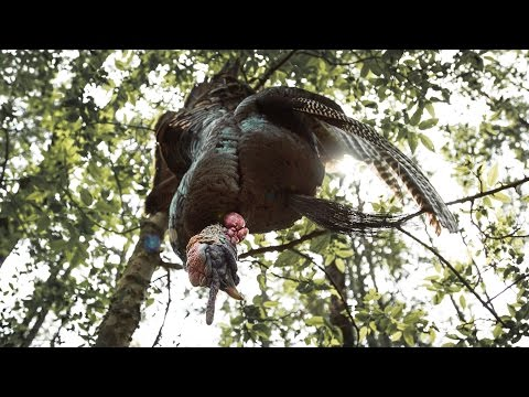 How To Clean A Wild Turkey | GameKeeper Field Notes