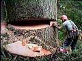 Drevorubač zrezuje veľký strom