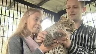 Вести-Хабаровск. Леопард родился