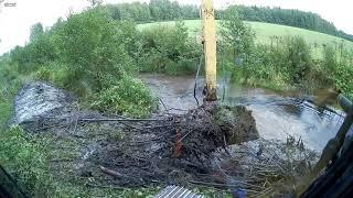Бобры заблокировали дорогу к плотине