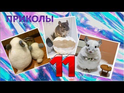 Лучшие приколы про ШИНШИЛЛ! Смешные ШИНШИЛЛЫ! Funny Chinchillas❤#11