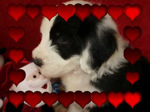Valentines Day Puppy Kisses!