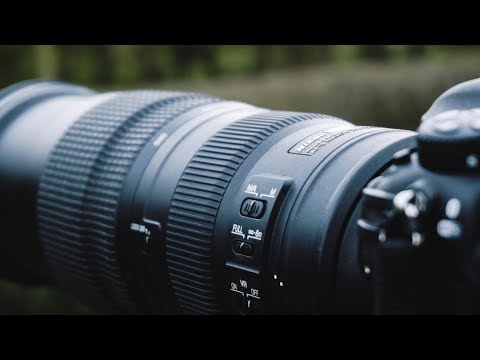 nikon-200-500mm-f5.6-wildlife-photography-field-review-|-bird-photography-tips