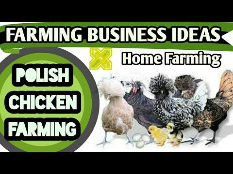 Polish Chicken Farming Business Ideas in English