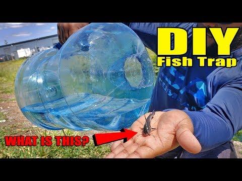 Plastic Bottle Fish Trap DIY Fishing