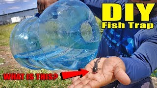 Plastic Bottle Fish Trap DIY Fishing