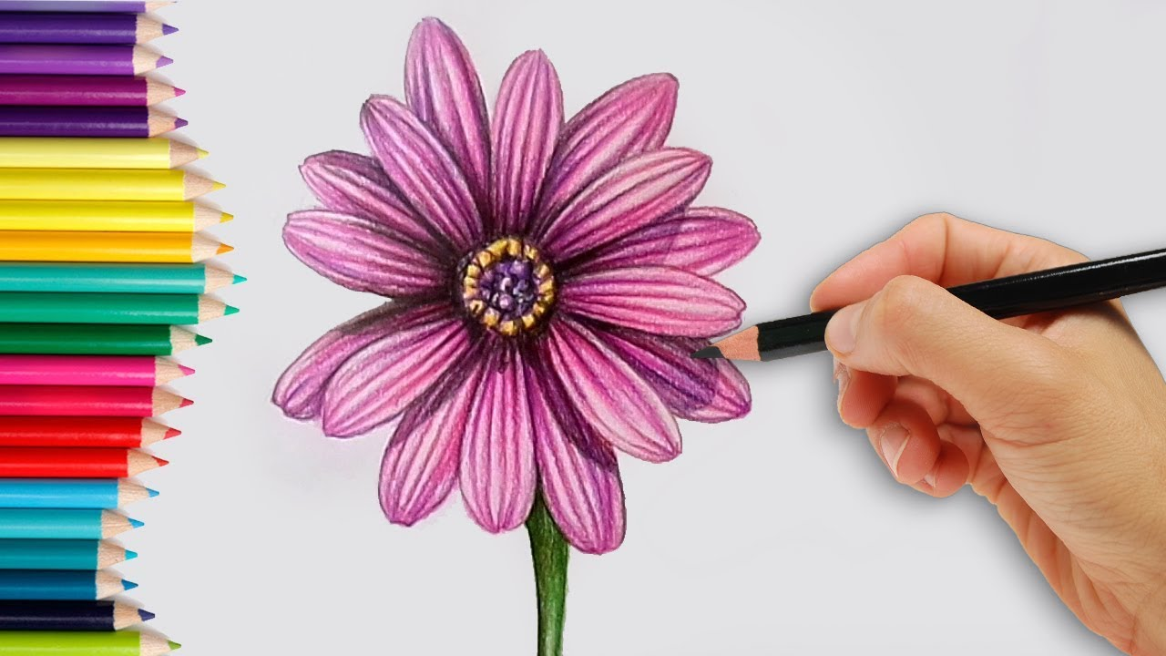 How To Draw A Realistic Dahlia Flower Step By Step How To Do Pencil