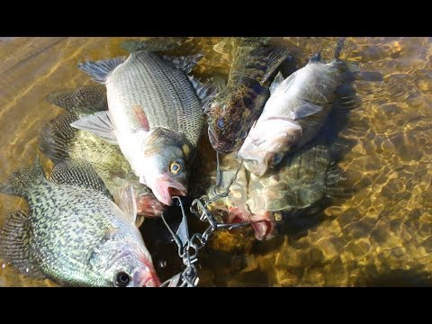 White Bass, Walleye And Crappie Fishing- Fort Atkinson Wisconsin