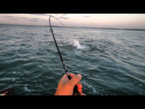 7 Species Slam! (Jetty Monster, Fake Tunas, & Bottom Fish)