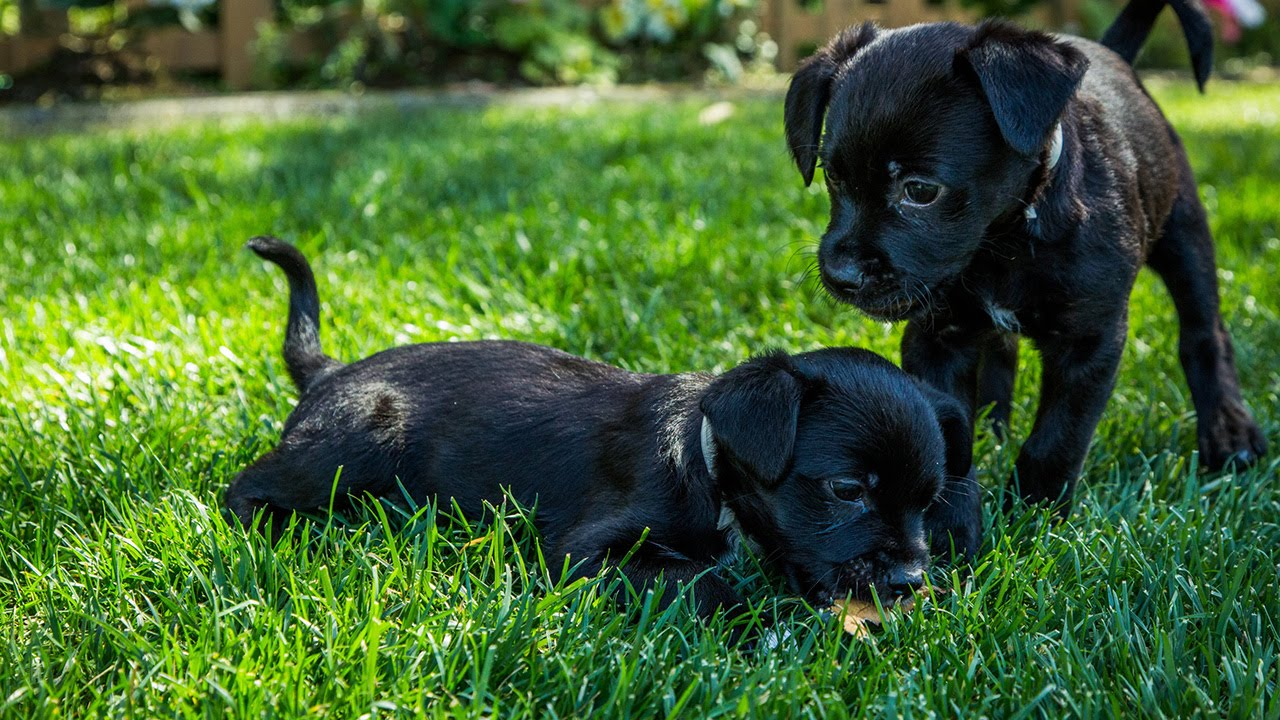 tips on adopting a new puppy youtube. Black Bedroom Furniture Sets. Home Design Ideas