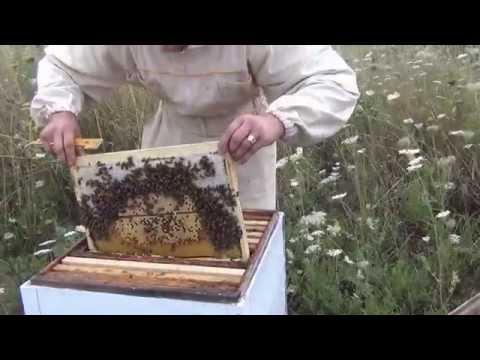 В краю крови и меда смотреть онлайн, 2011