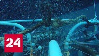Смотреть видео На такое способна только российская наука: беспрецедентный проект у берегов Аляски - Россия 24 онлайн