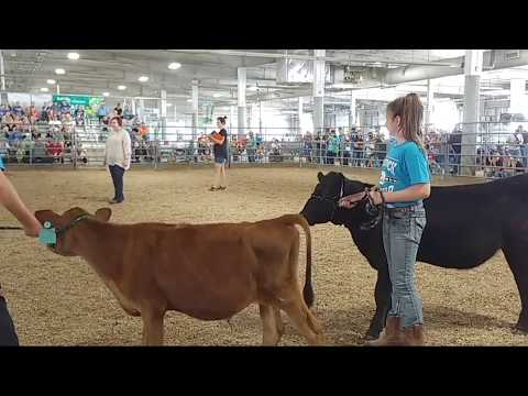 2017 Lancaster County Super Fair - 4-H Bucket Calf Show (entire show)