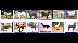 Selection of Goat For Goat Farming In Hindi