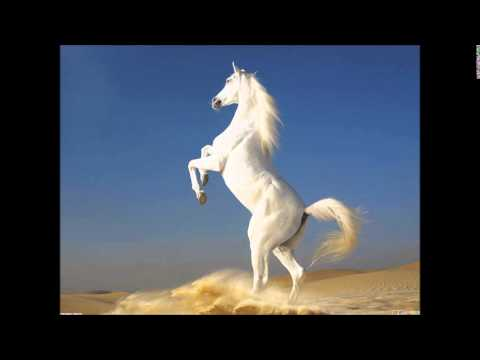 """""""Ride the White Pony"""" -  Song I Wrote About Temptation"""