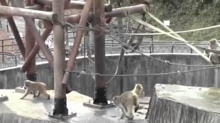 동물 연결   일방적 인 남자의 교미
