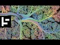 The Art of the Human Brain