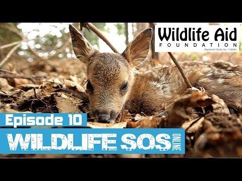 Wildlife SOS Online - Episode 10