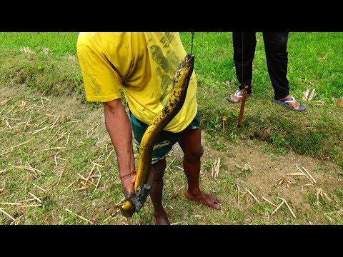 Primitive technology - survival skills | Catch Big Eel fish in deep Hole By Hand (Part-02)