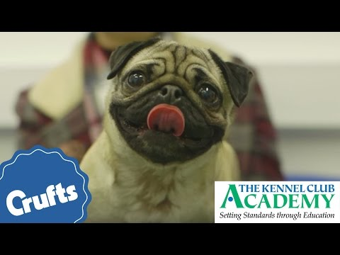 Dog Health: What Is Brachycephalic Obstructive Airway Syndrome?