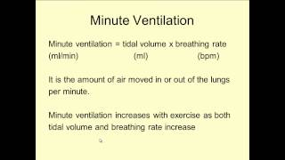 Lungs 2; Spirometer trace and Minute Ventilation