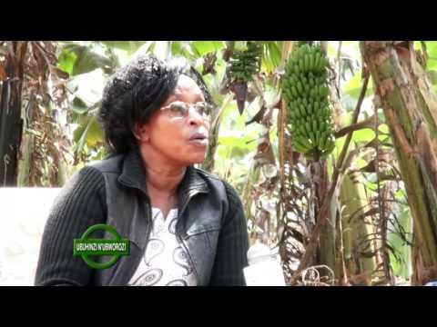 UMWOROZI UHUNIKAUBWATSI -BUGESERA-Fulgence HAKIZUWERA-Royal tv
