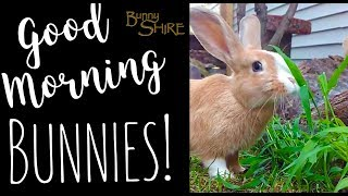 Good Morning, Bunnies! 9