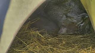 Bobcat Rehab and Release Cam 11-30-2017 08:30:45 - 09:30:46 thumbnail