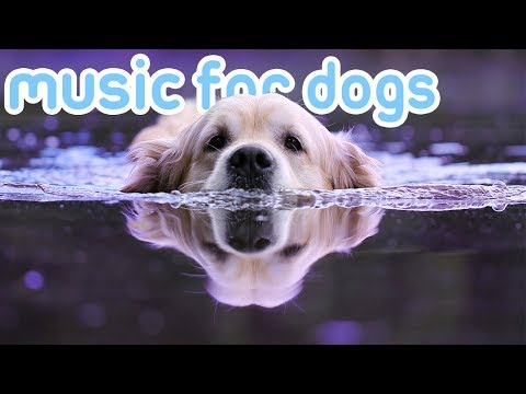 11 HOURS Music for Dogs! ASMR Music to Relax and Calm Your Dog! NEW!