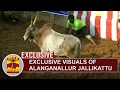 Exclusive Visuals Of Alanganallur Jallikattu | Thanthi Tv video